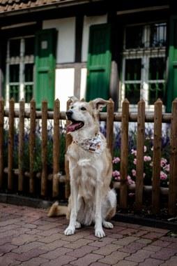 Hundefotos (10)