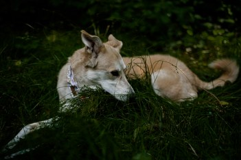 Hundefotos (11)