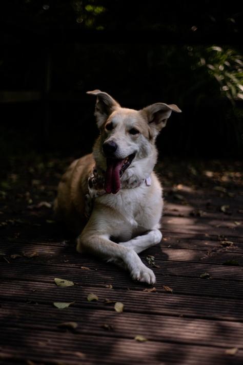 Hundefotos (12)