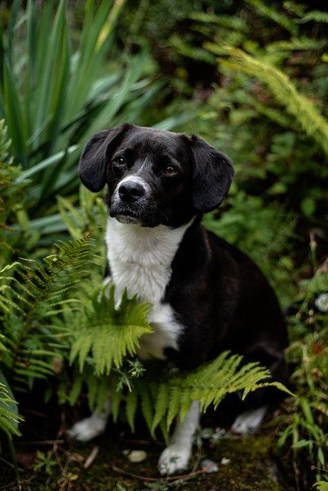 Hundefotos (15)