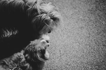 Hundefotos (20)