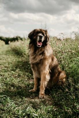 Hundefotos (9)